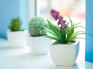 Plant pot on facility maintenance page